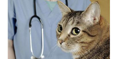 Как сделать поездку к ветеринару менее травматичной для котика