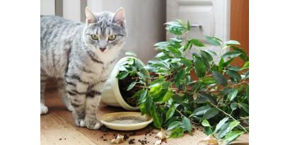 Как обезопасить домашние растения и дачные грядки от пушистого агронома