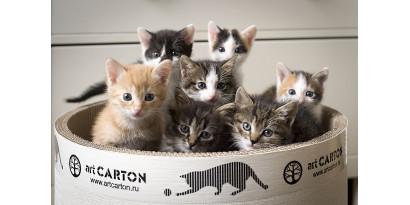 Как выбрать когтеточку, когда характер и повадки котика еще не известны?