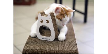 Как отучить котика от привычки драть мебель и шторы?